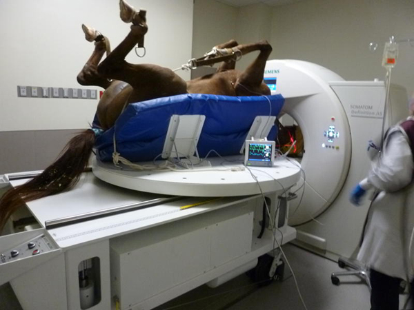Scanning a Horse With a Siemens CT Scanner | Providian Medical